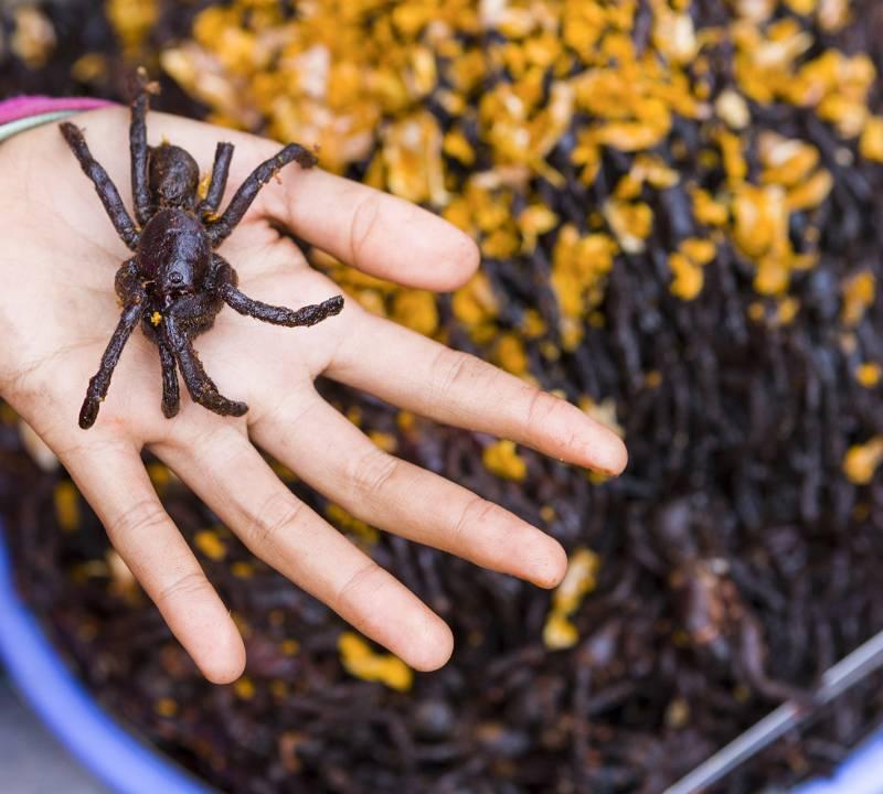 Eat Spiders in Cambodia