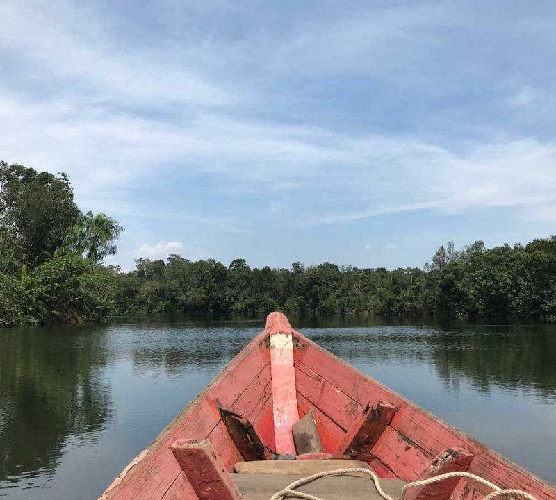 Explore and hike Cambodia's rainforest